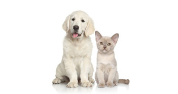 From A to Z Everyday Items That are Dangerous for Pets