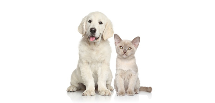 From A to Z   Everyday Items That Are Dangerous to Pets
