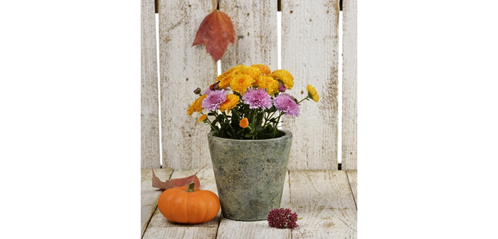 Fall for Mums!!