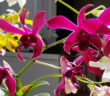 Mindful Monday 4-18-16 Orchids