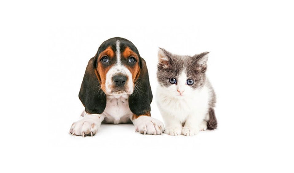Human Foods that are Dangerous for Dogs and Cats