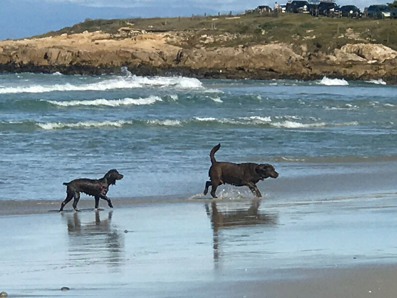2 dogs on beach