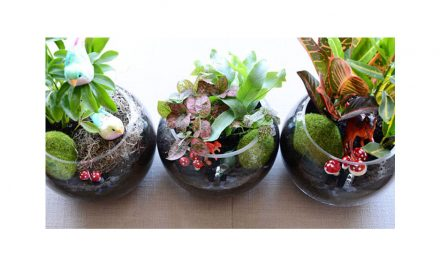 In Honor of Earth Day Build a Terrarium with Kids