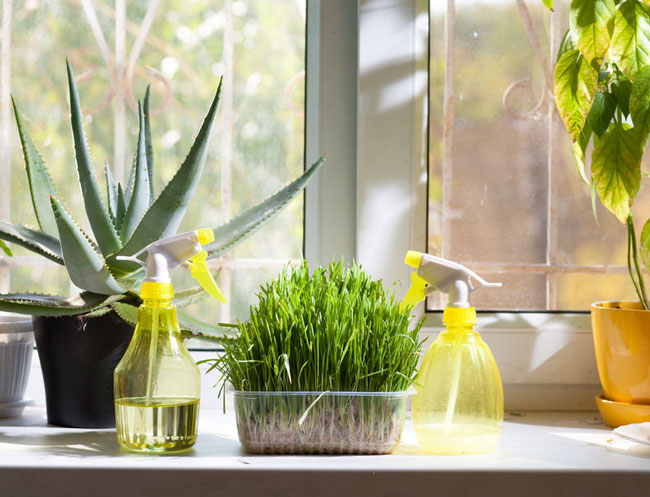 Taking Care of You … Health Benefits of Everyday Houseplants