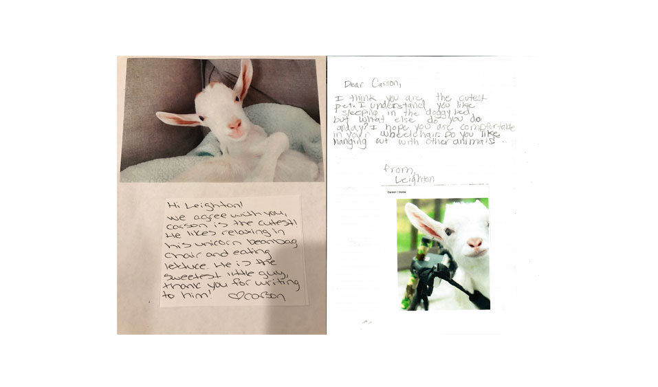 Become a Pen Pal with a Farm Animal