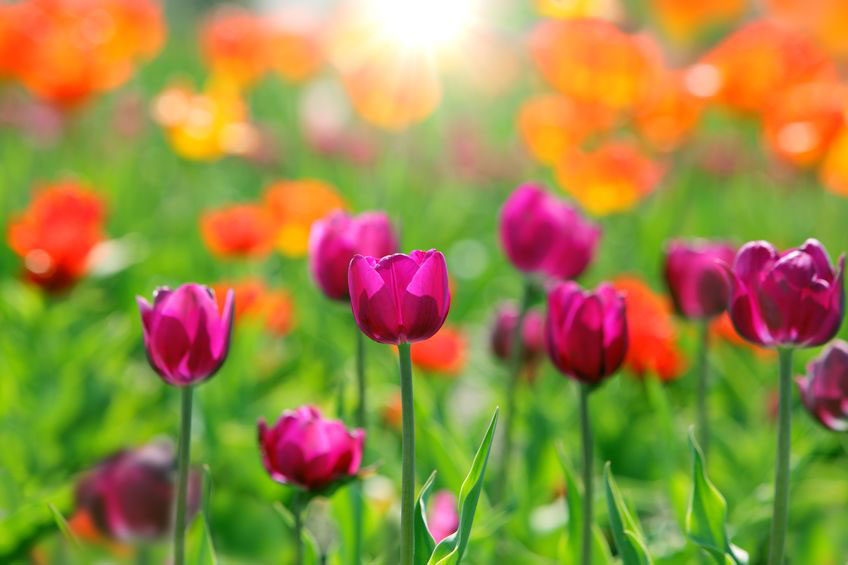 It's Your Time to Bloom…