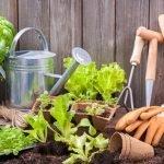 4 Reasons to Start Gardening!